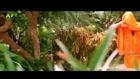 Husn Ki Wadiyon Main Ishq Palta Rahega - Love song HD