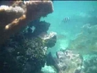 Snorkeling Puerto Morelos Mexique