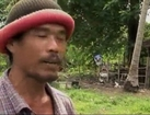 Ungewöhnliche Arbeitnehmer: Affen als Ernte-Helfer