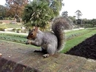 Squirrel in Kensington Garden (Hyde Park), London