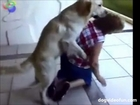 Dogs Humping