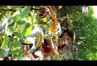 Chhuwan Rah Gadra Jaibu bhojpuri hot song